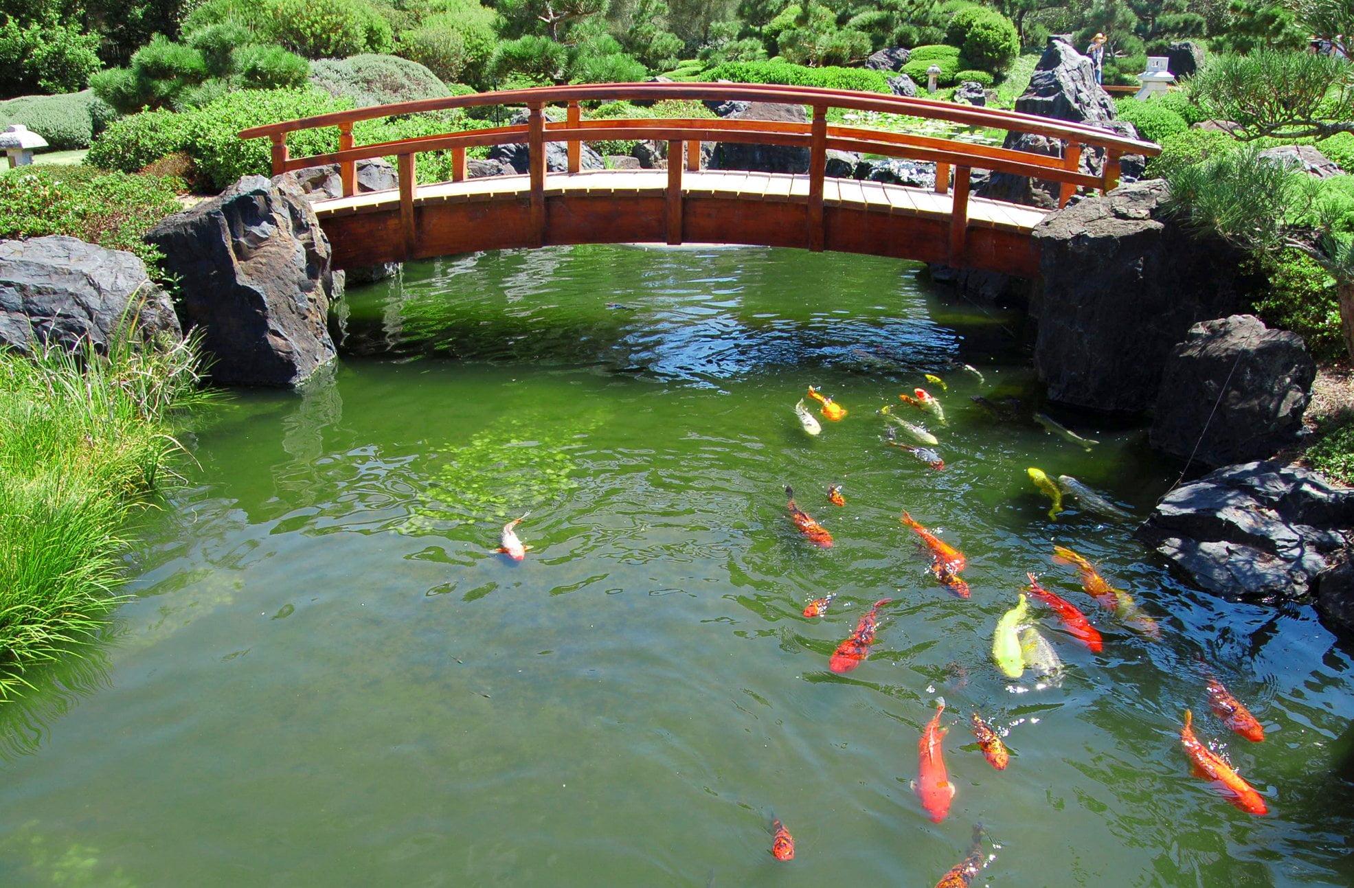 656387 357508381645323084383584748 - Как создать пруд с рыбами на даче