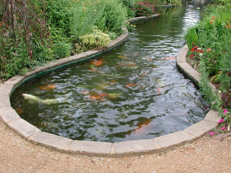 foto 283346427127304650695 - Как создать пруд с рыбами на даче