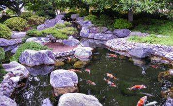 Как создать пруд с рыбами на даче