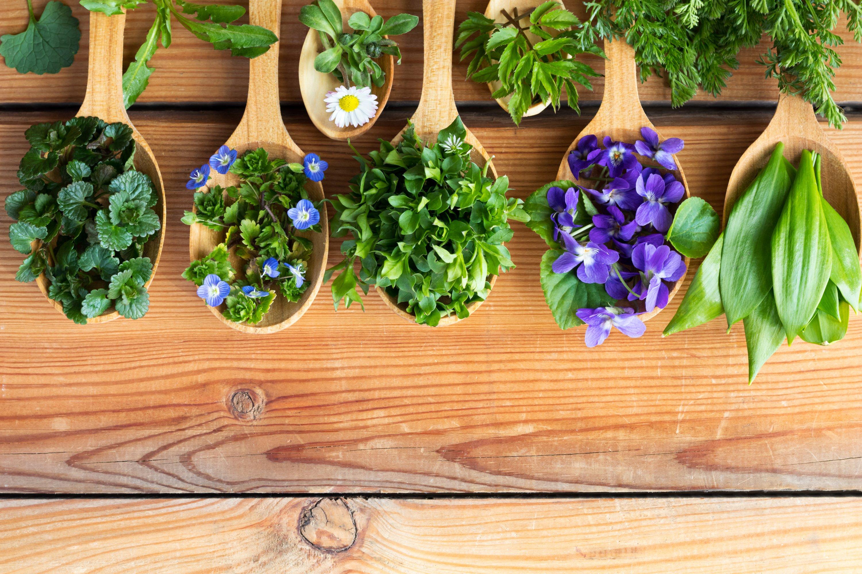 10 съедобных цветов и растений